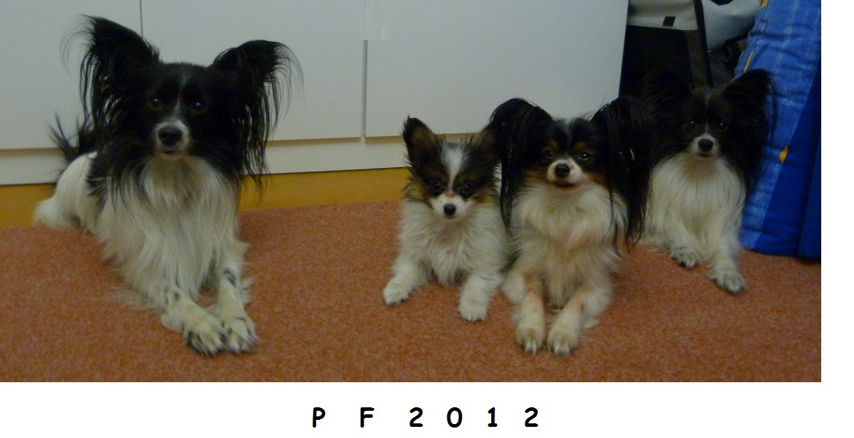 papillons-obedience-mia-3-month-013.jpg